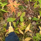 Shoes and autumn leaves