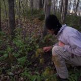 Simon vient de découvrir une plante printanière