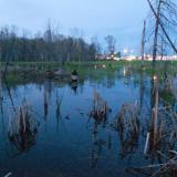 L'étang, non-lieu