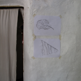 Drawings of leaves inside my house