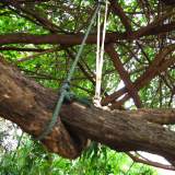 Tree suspension system at Lek Guesthouse (Chiang Mai)